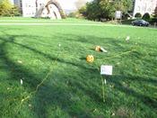 Archaeology Mini Golf