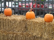 Putt likes then pumpkins